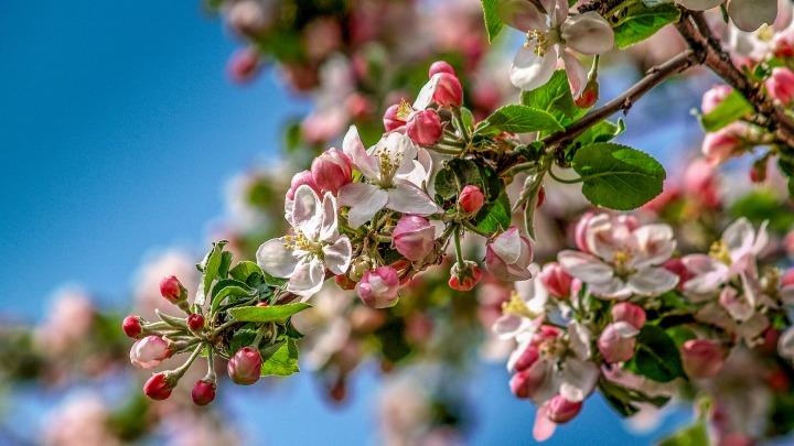 spring-4503815_1920.jpg