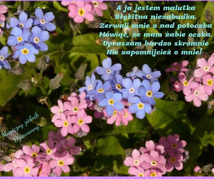 60425418_1612742382196490_2056911562345545728_n.jpg