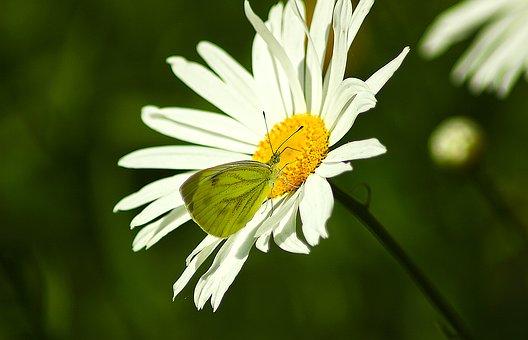 flower-1572225__340.jpg
