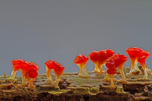 slime-mold-2842780__340.jpg