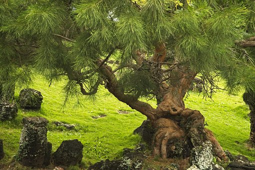 tree-3207889__340.jpg