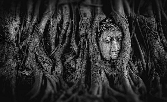 buddha-2937911__340.jpg