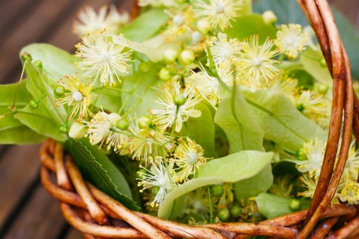 kwiaty-lipy-w-czerwcu-zbieramy-w-zimie-pijemy-3.jpg