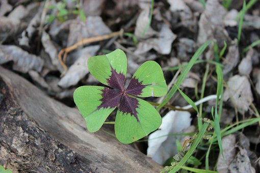 lucky-clover-2795103__340.jpg