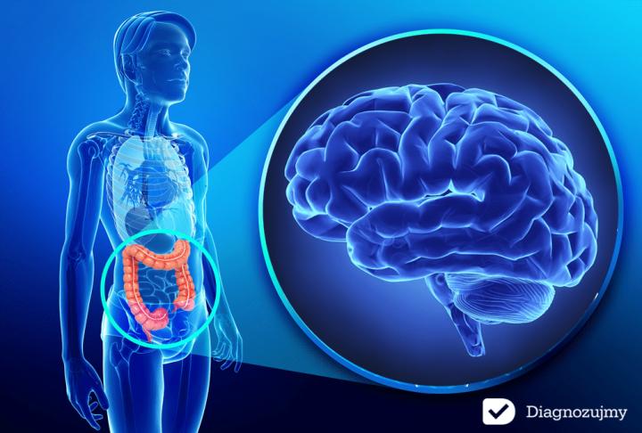 jelita-drugi-mózg-Diagnozujmy.png