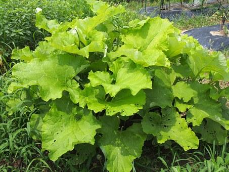 vegetables-972999__340.jpg