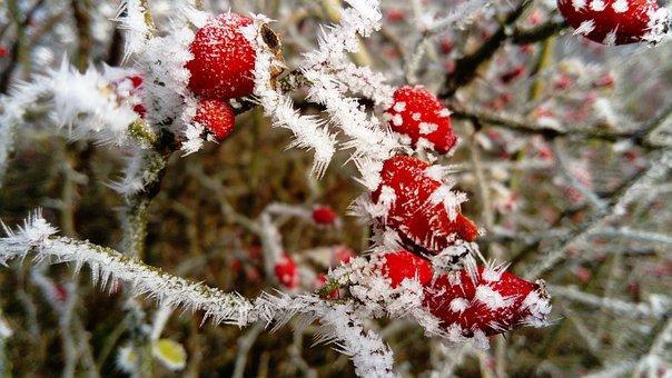 frost-3018057__340.jpg