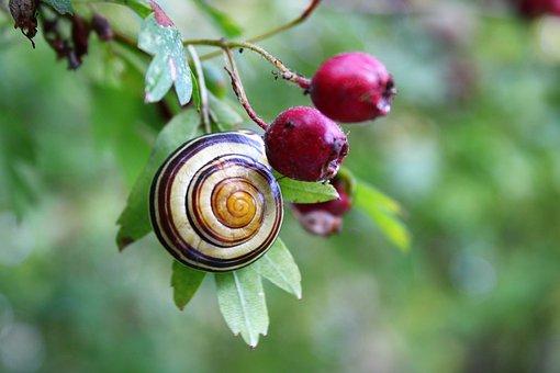 snail-3744870__340.jpg