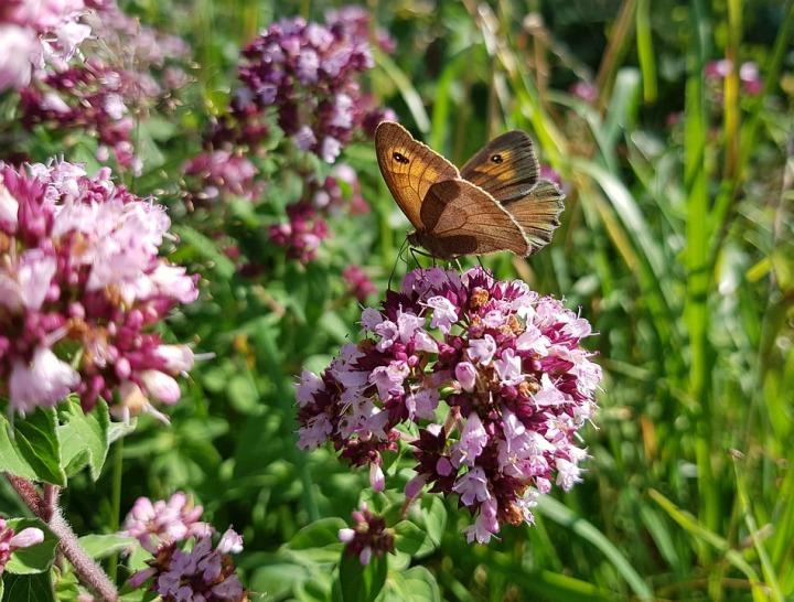 butterfly-2473738_960_720.jpg