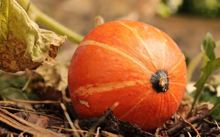 pumpkin-3806393_960_720.jpg
