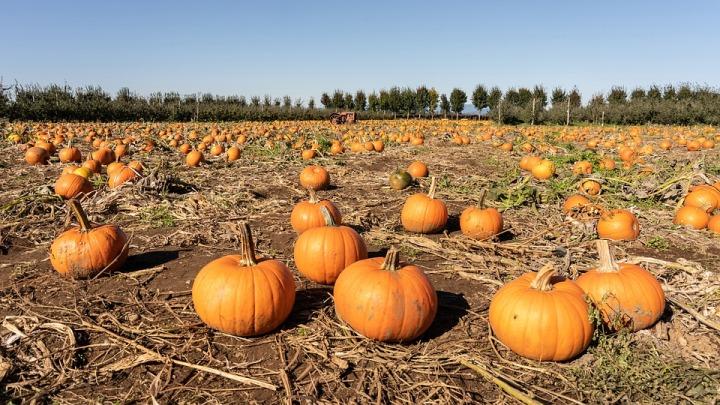 pumpkin-4540291_960_720.jpg