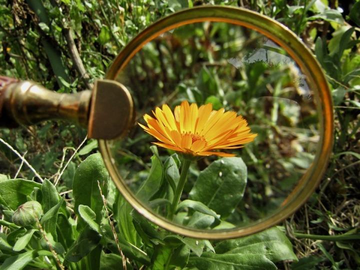 magnifying-glass-3714540_960_720.jpg