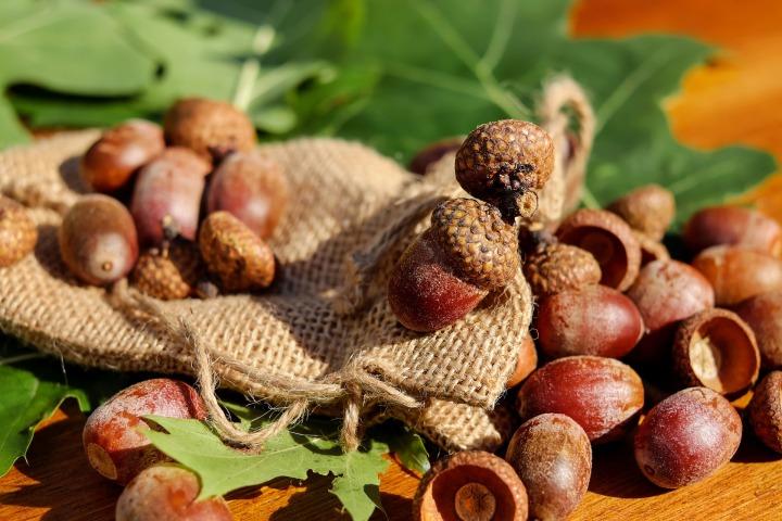 acorns-1710577_1920.jpg