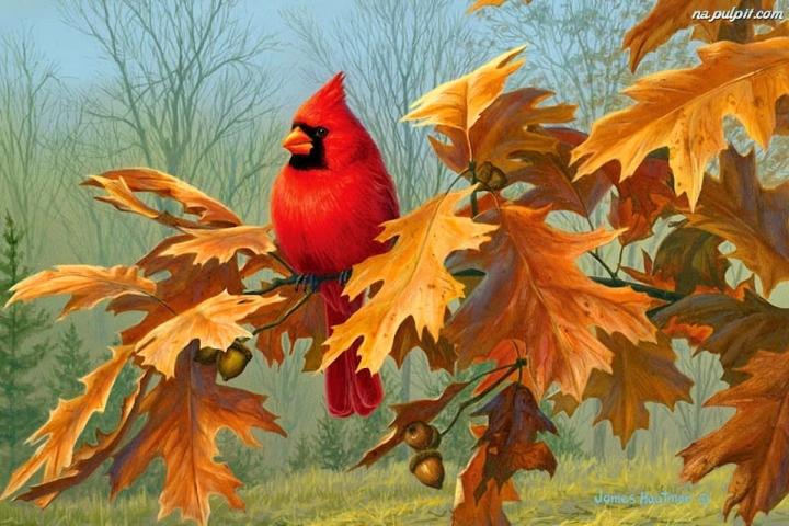 jesien-ptak-kardynal-galazka-debu.jpg