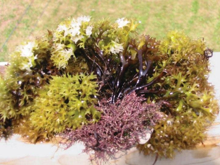 moss-colours-Irish-range-purple-yellow.jpg