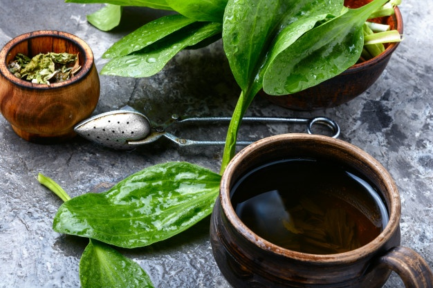 ziolowa-herbata-z-babki-lancetowatej_75924-12457.jpg
