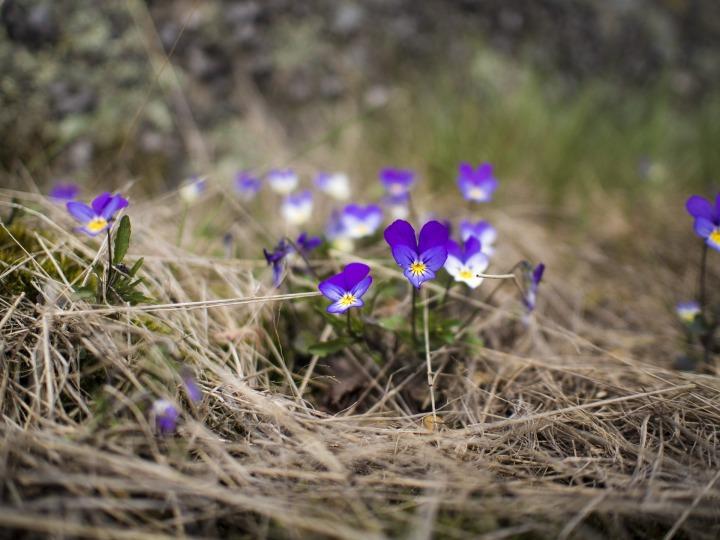 flowers-2735477_1920